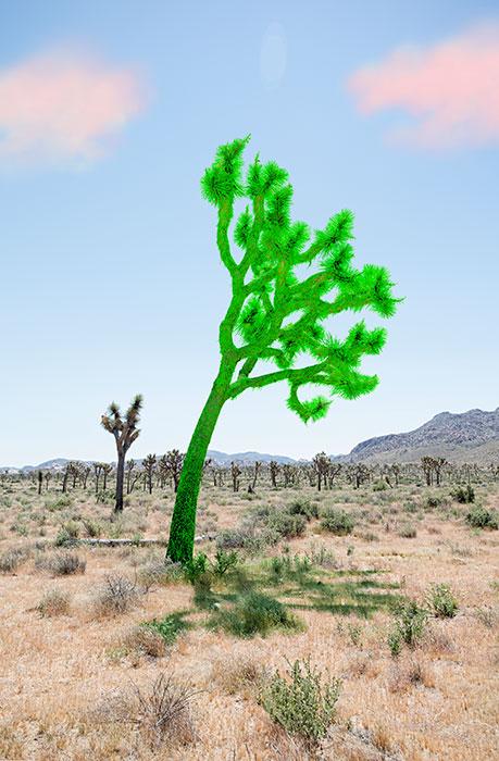 "Joshua Tree Green,  2018, Édition de 5, impression pigmentaire, 30 x 20 ""."