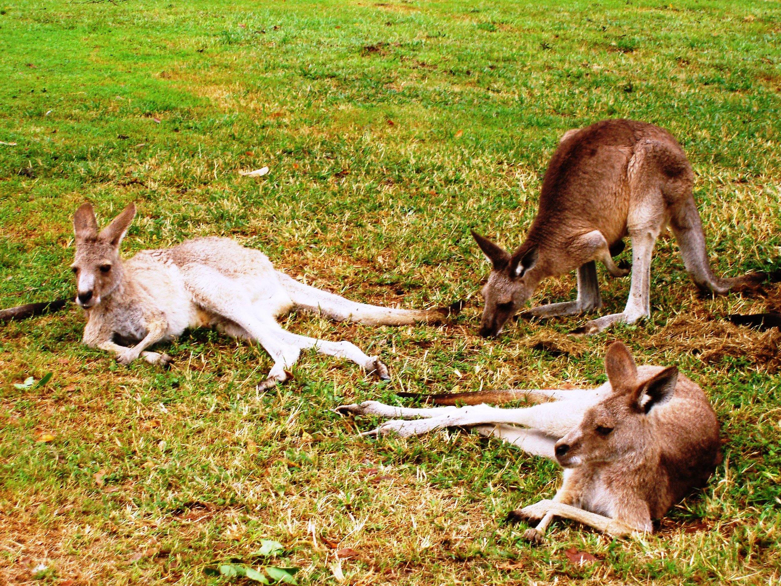Australia 073.jpg
