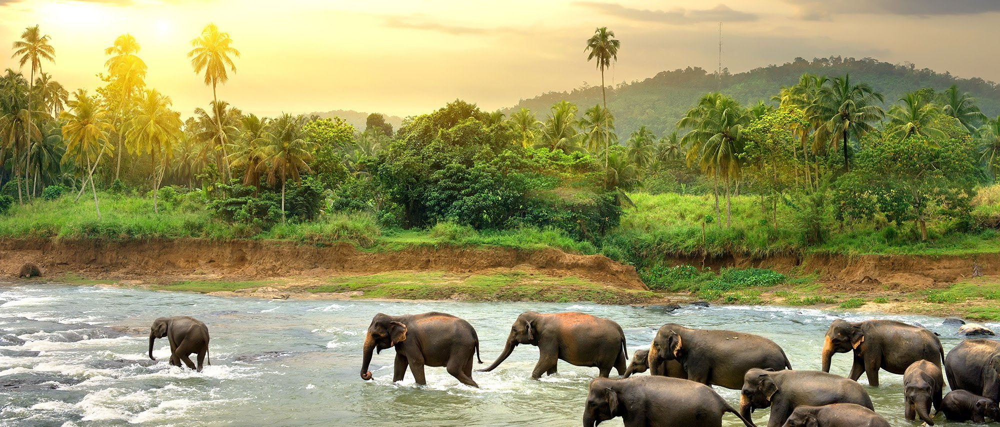 exotic sri lanka - FEBRUARY 21 - MARCH 7, 2020