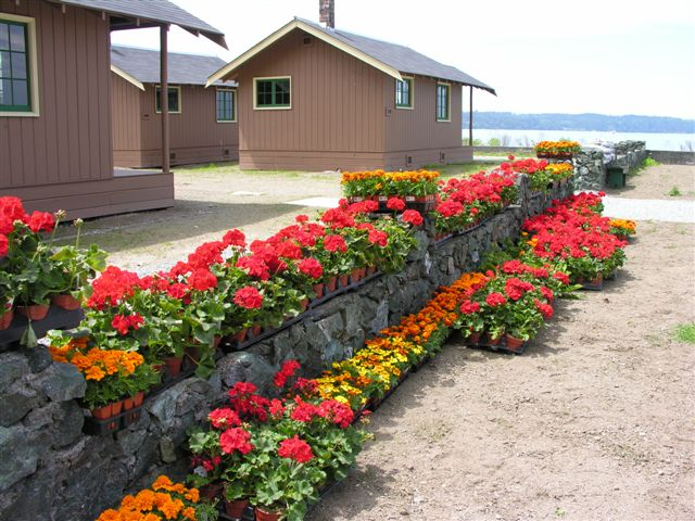 View of Cama beach cabins with flowers lining a wall
