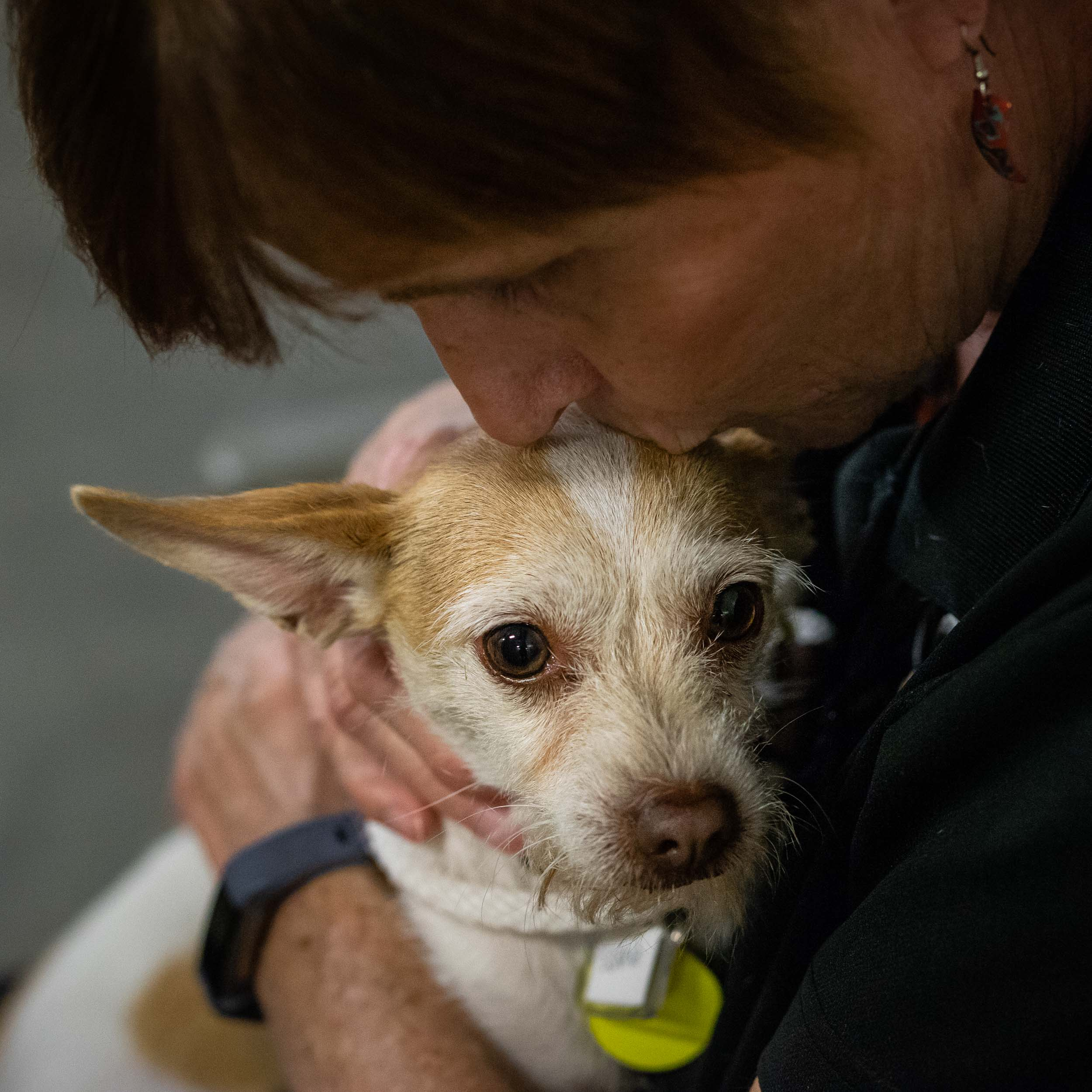 A volunteer comforting one of the scared little dogs.