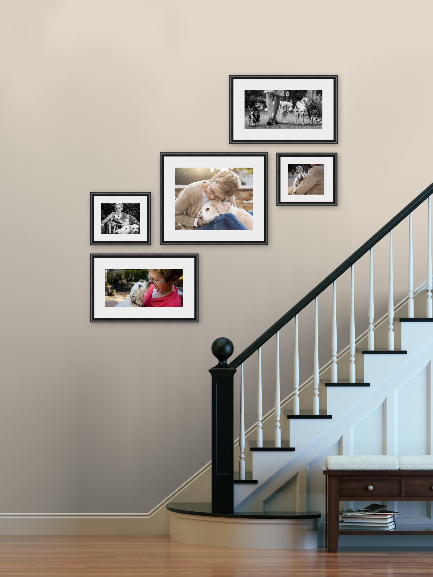 Pet photography artwork, wall gallery