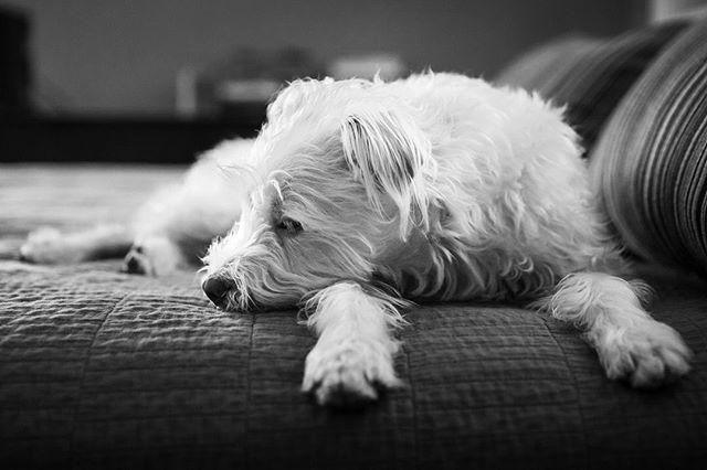 "Many documentary family photographers do what is called ""day in the life"" sessions. Which are just what they sound like - the photographer follows the family around for an entire day to document what real life looks like. ⠀ ⠀ Well I decided to do a day in the life pet session for my dearest Maggie. Stay tuned for more of this fascinating sage, but here's a brief preview...⠀ .⠀ .⠀ .⠀ #dayinthelife#dogphotographer#sacramentopetphotographer#dogphotography#petphotography#sacramentodogs#rescuedog#excellent_dogs#dogumented#barkpost#bestwoof#dailybarker#weeklyfluff#pupdoggydog#dogsagram#petbox#dailyfluff#dogdays#dogsofinstaworld#dogshots#fab_pets#igwoofs#topdogphoto #sactowndogs #lifewellcaptured #thedocumentaryapproach #documentlife #documentyourdays #nothingisordinary"