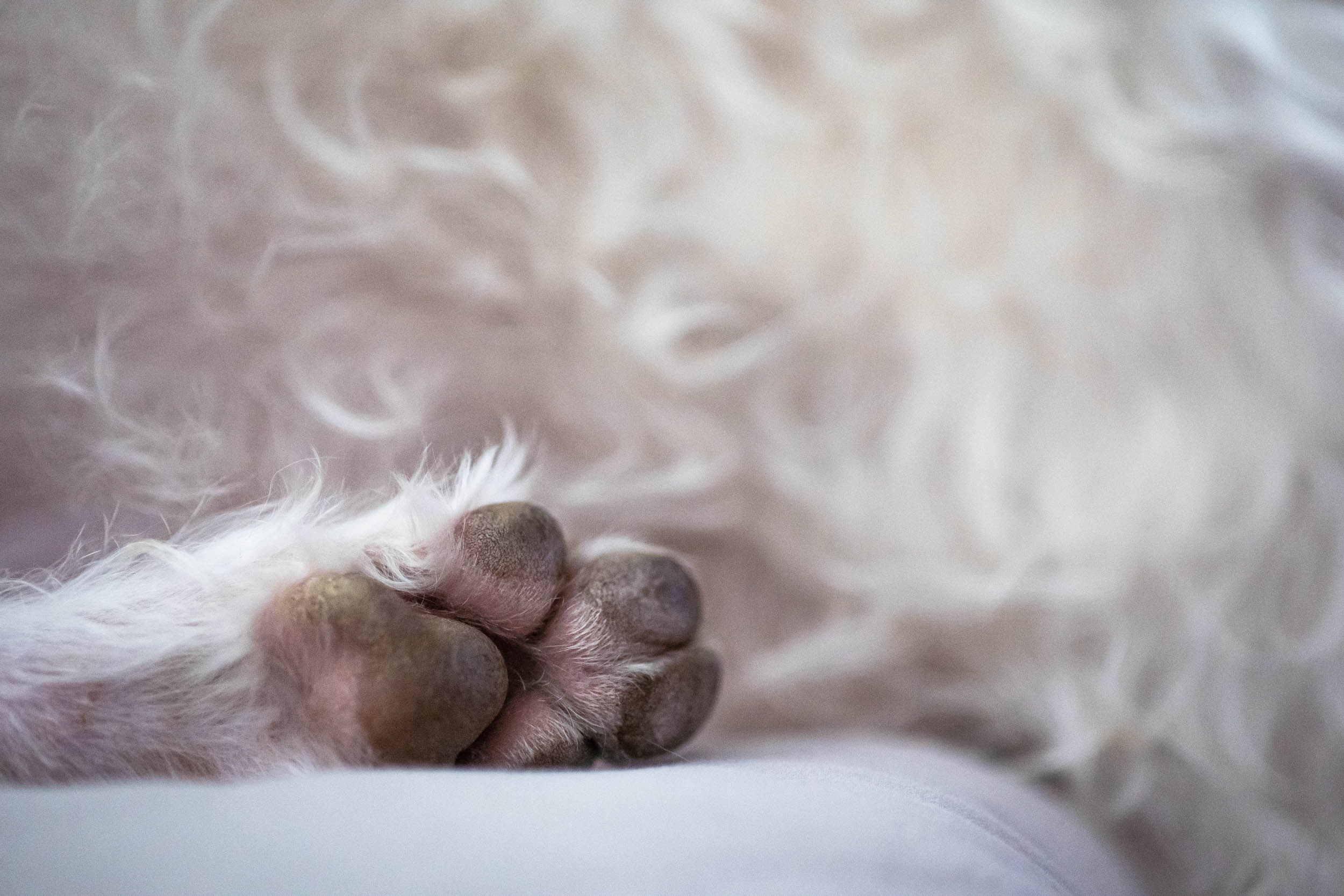 Dog toes…one of my favorite subjects (don't judge)