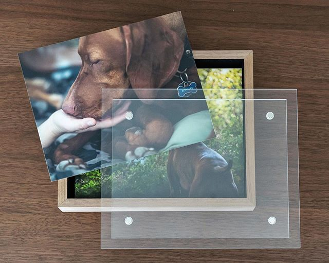 My first peek at the @finaoalbums portfolio image box - a handcrafted walnut box with acrylic cover. It is filled with 10-8x10 mounted archival prints. It's a great way to showcase many of your favorite photos from your session. A gorgeous way to keep them, and then they can be rotated into a frame, easel, or propped on a shelf.⠀ ⠀ LOVE THEM! And I love to give clients the opportunity to see and experience their images, rather than just store them on a hard drive or phone somewhere. ⠀ .⠀ .⠀ .⠀ #photographyprints#imagebox#petphotography#dogphotography#sacramentopetphotographer#dogphotographer#petbox#printphotographer