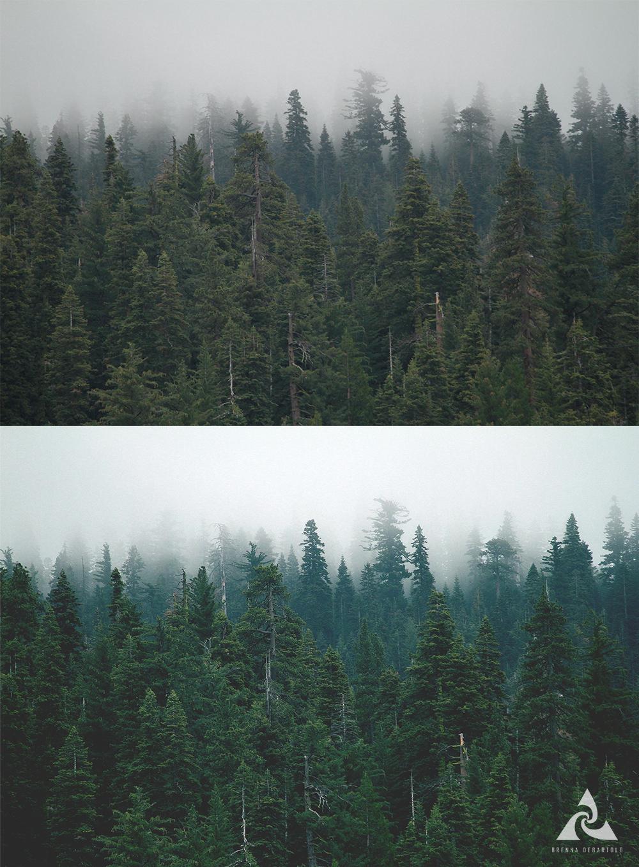 Forest_BD.jpg