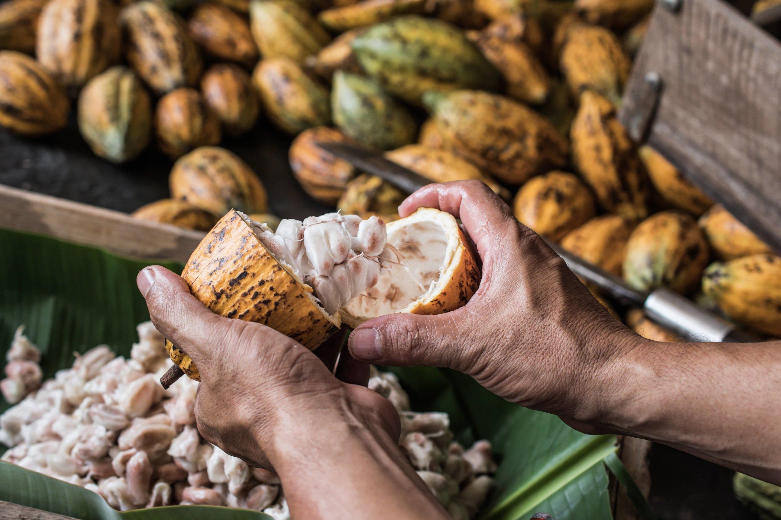 cacao-superalimentos-mexicanos