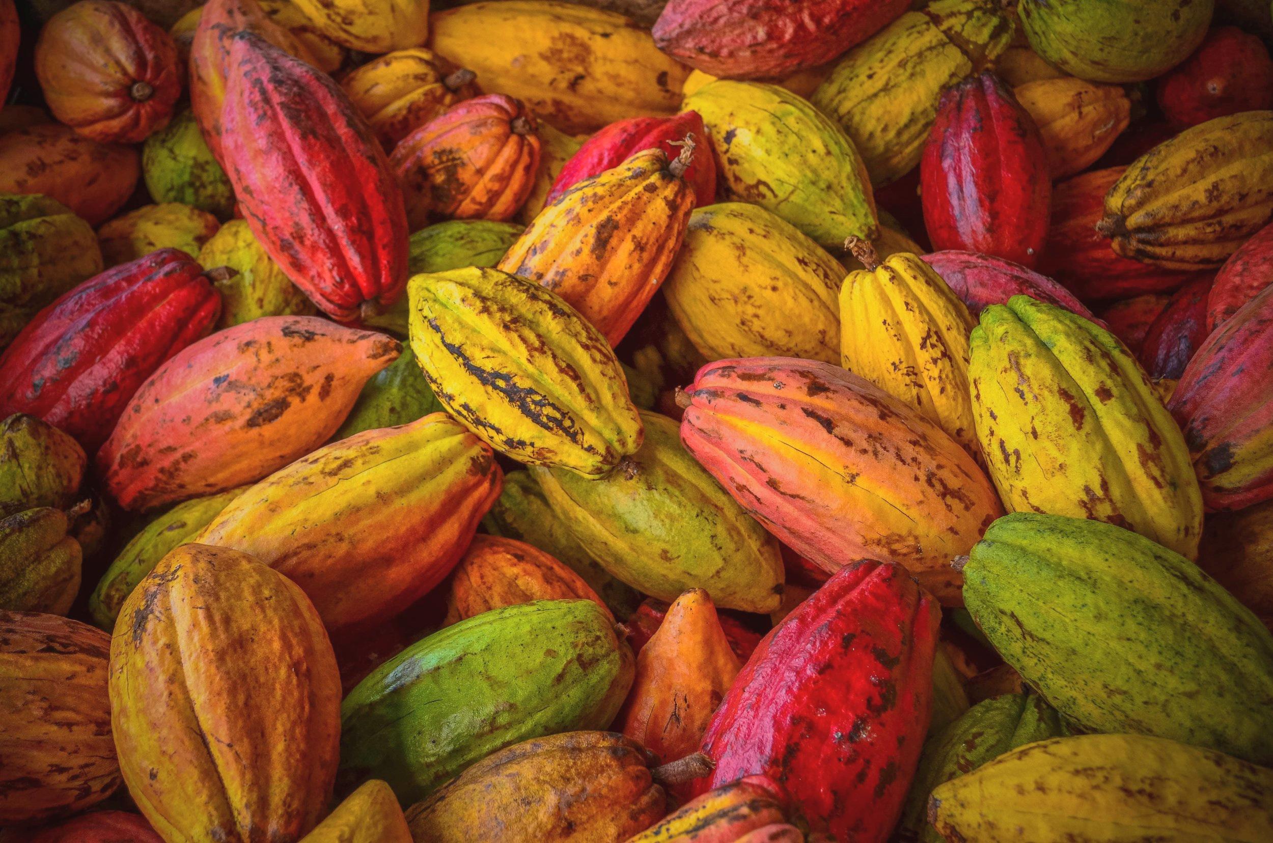 granos-cacao-superalimentos-mexicanos