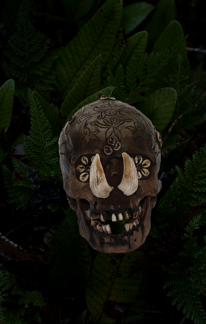 Dayak Skulls - Trophy skulls by the Borneo head hunting tribe that represent ferocity in battle