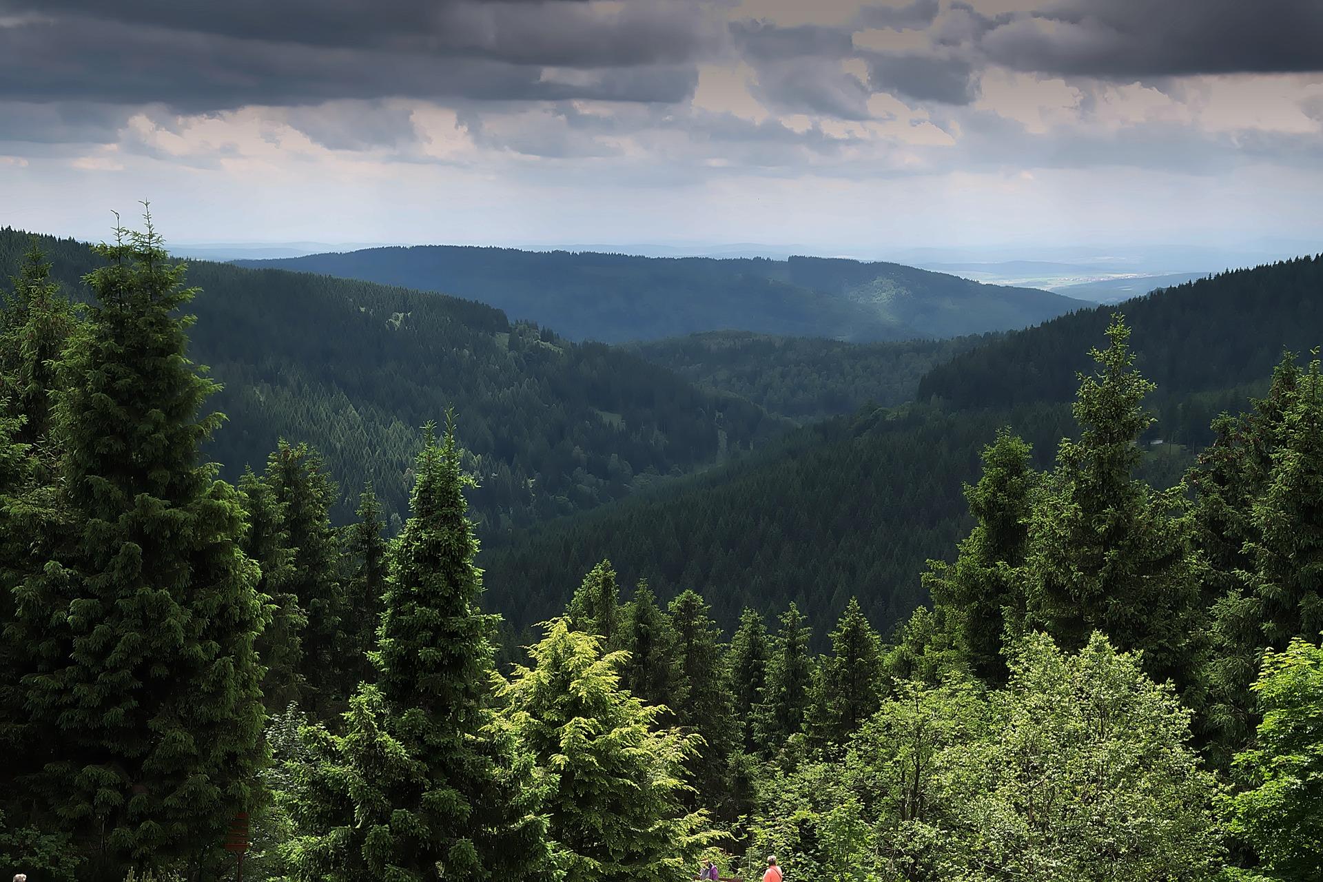 forest-2431875_1920.jpg