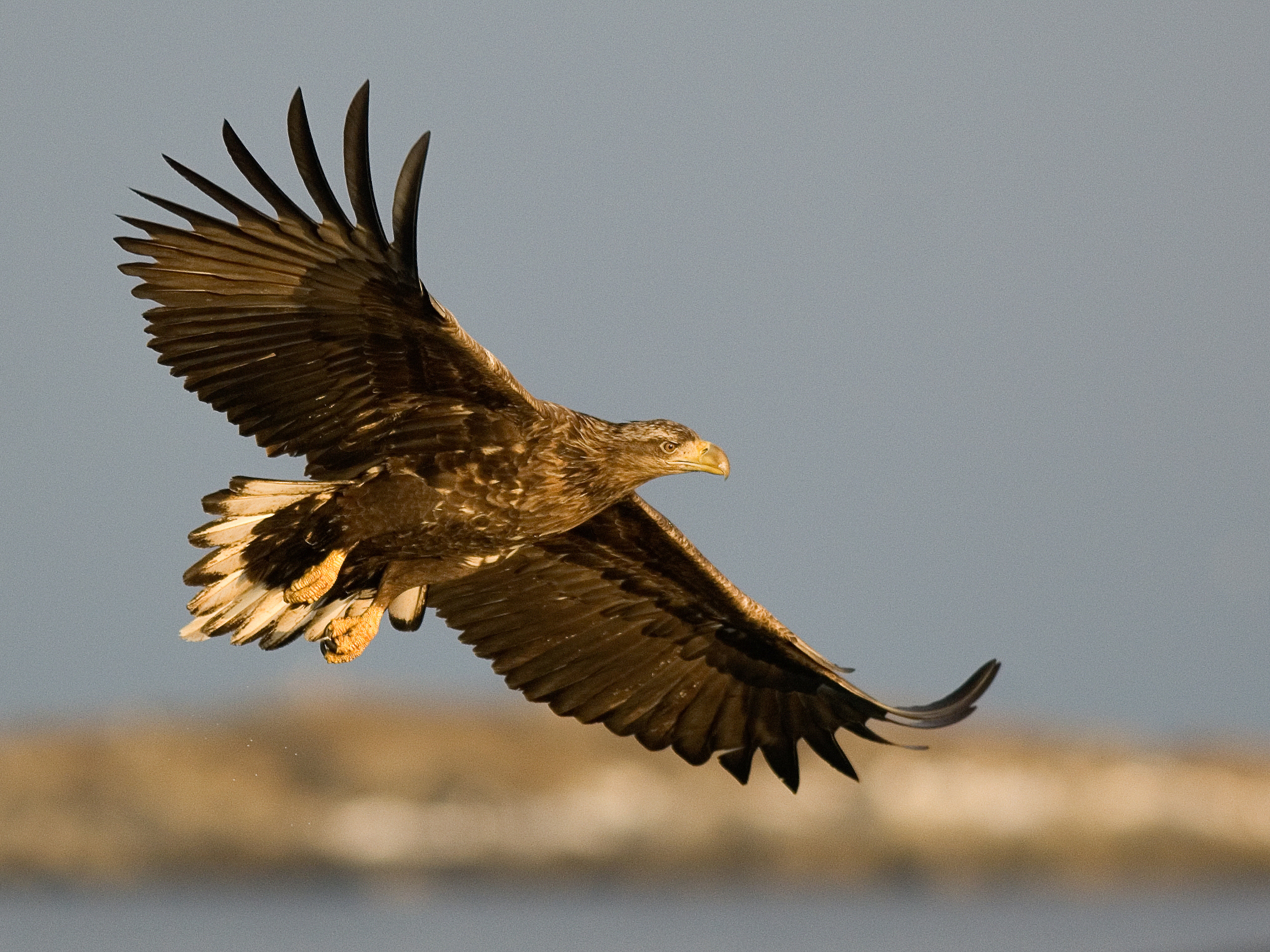 Birdwatching - Vega is packed with excellent localities for bird watching and our units are equipped with Din Turs self guiding system for bird watchers. We can also take you on a guided tour out in the World Heritage area and show you the best places to view white taled eagles and other birds.