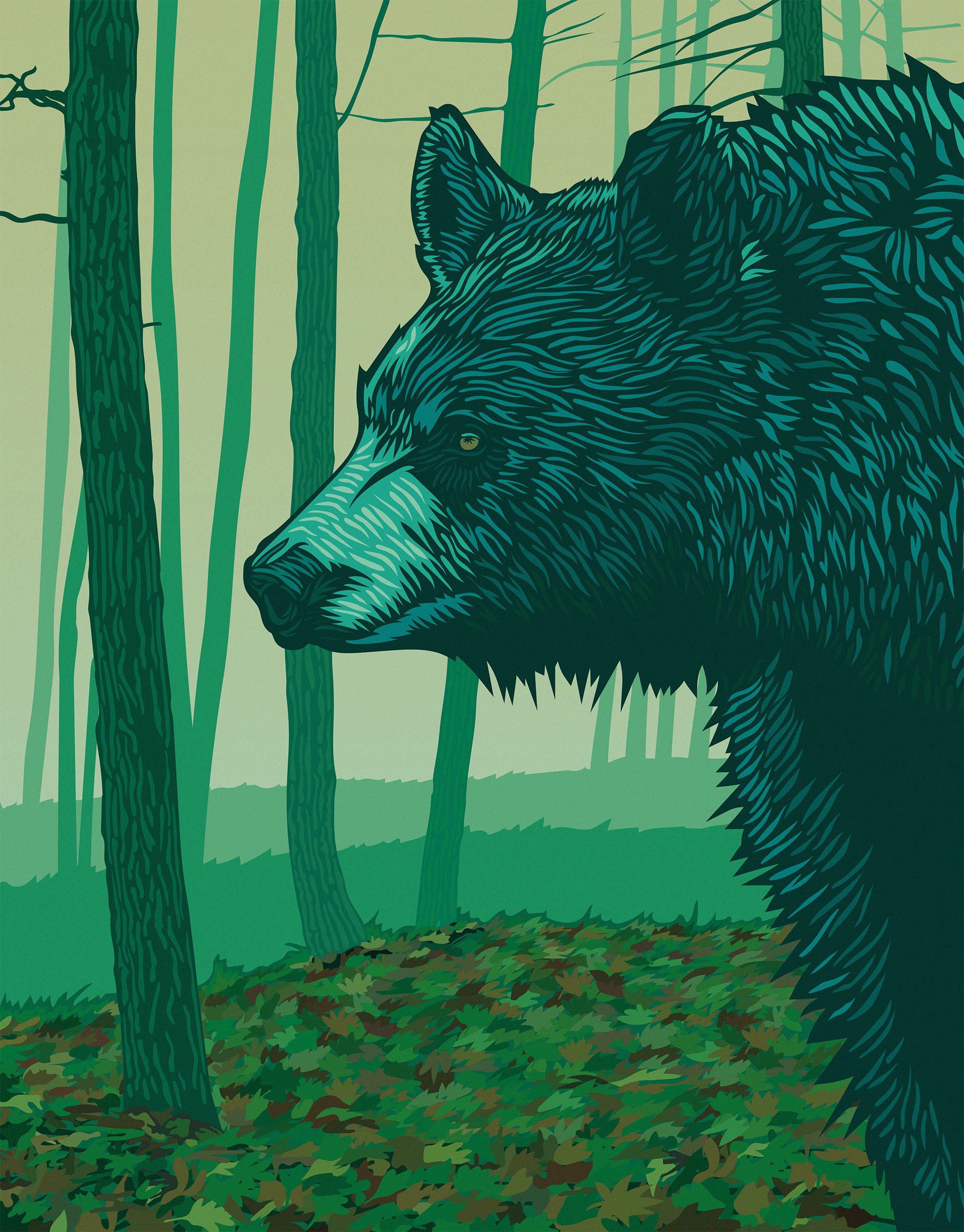 Bear-Illustration.jpg
