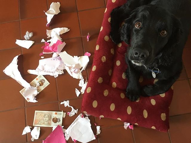 I wonder who ate my fuckin' birthday card?