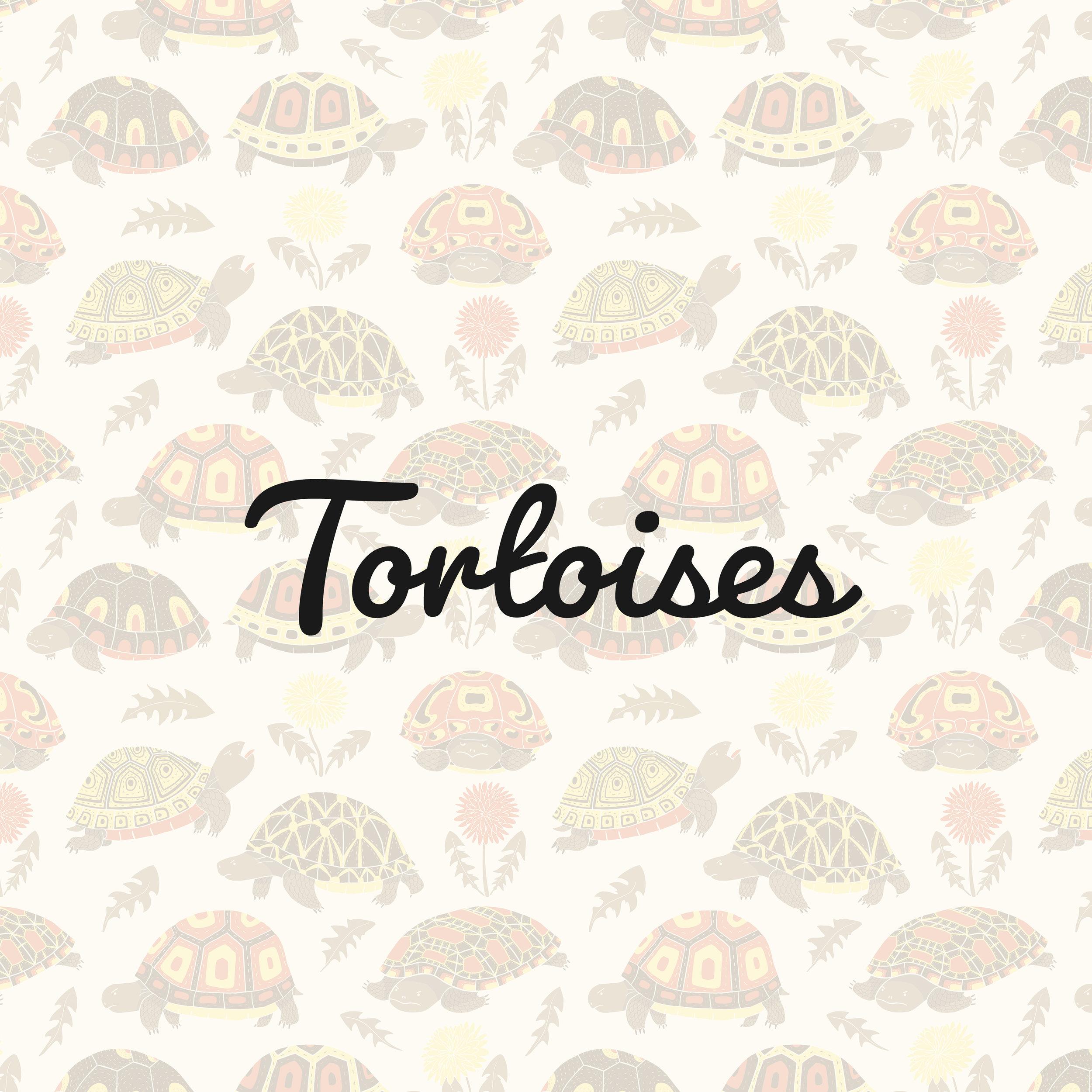 Torts_square.jpg