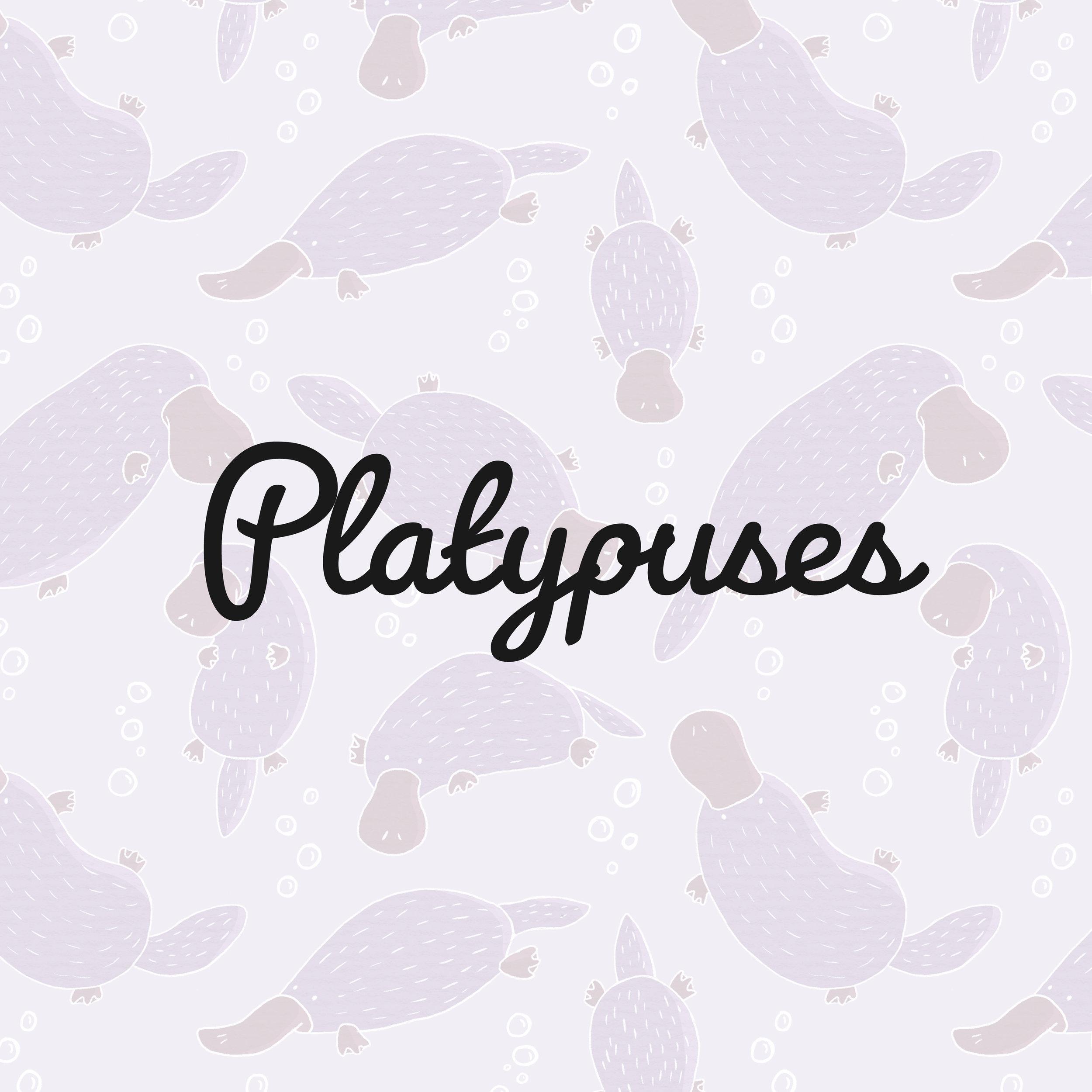 Platypus_square.jpg