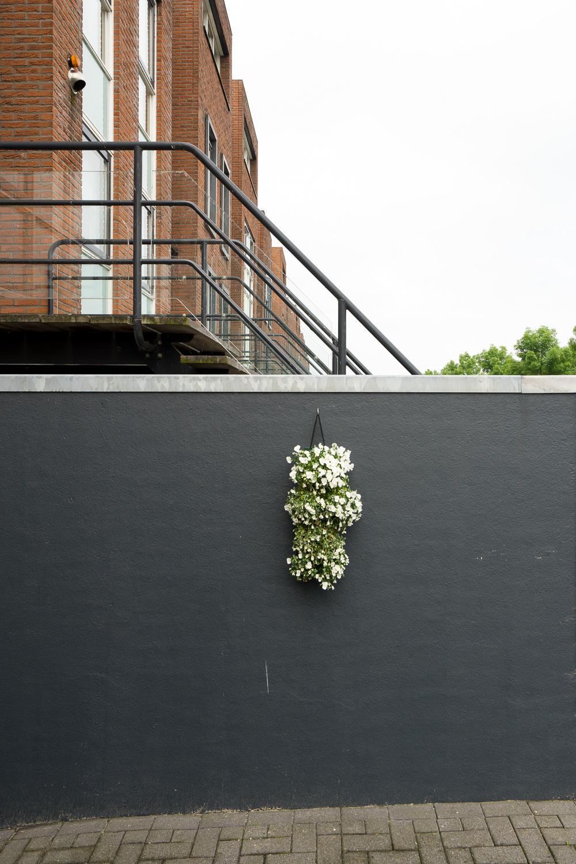 rowhouse-grey-flower-07629.jpg