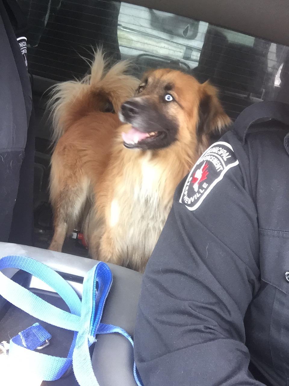 Dog Found Tompkins Avenue