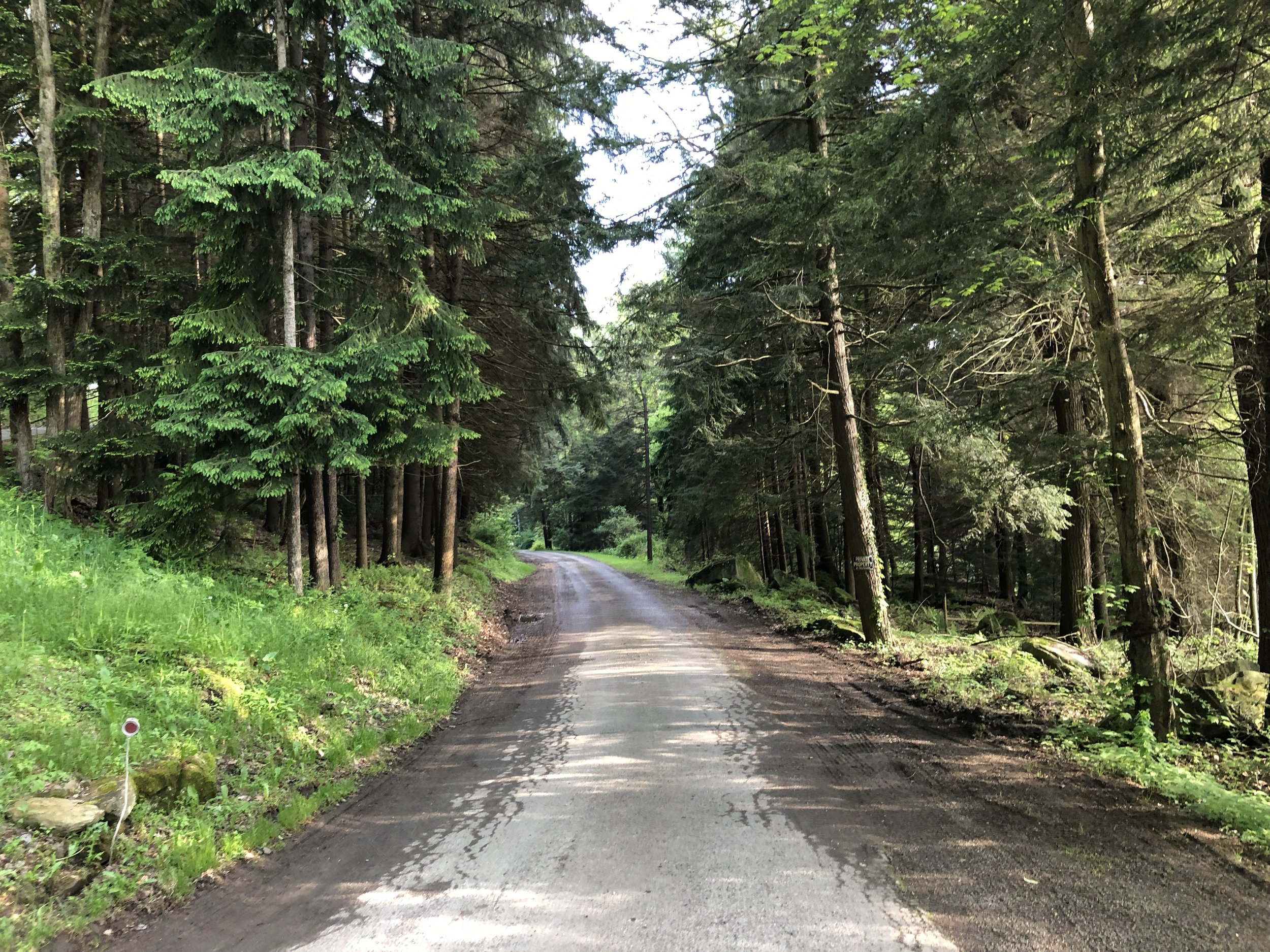 Even the road into Penn Wood Campground is beautiful.