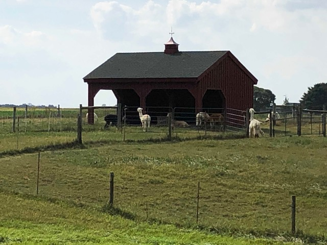 Suze was able to purchase some alpaca yarn taken from one of the more than 50 alpacas on the farm.