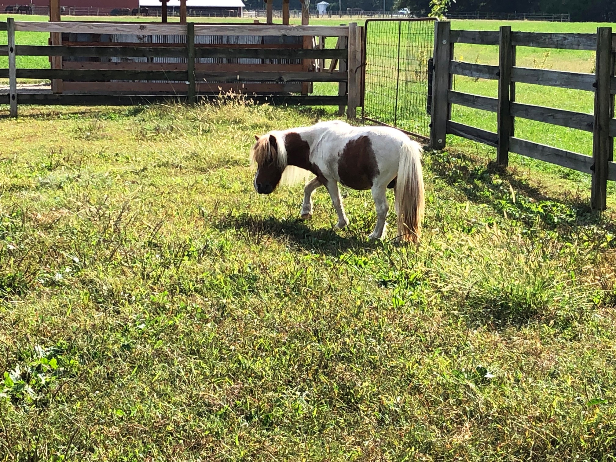 We've seen a lot of goats on our travels, but not as many miniature ponies.