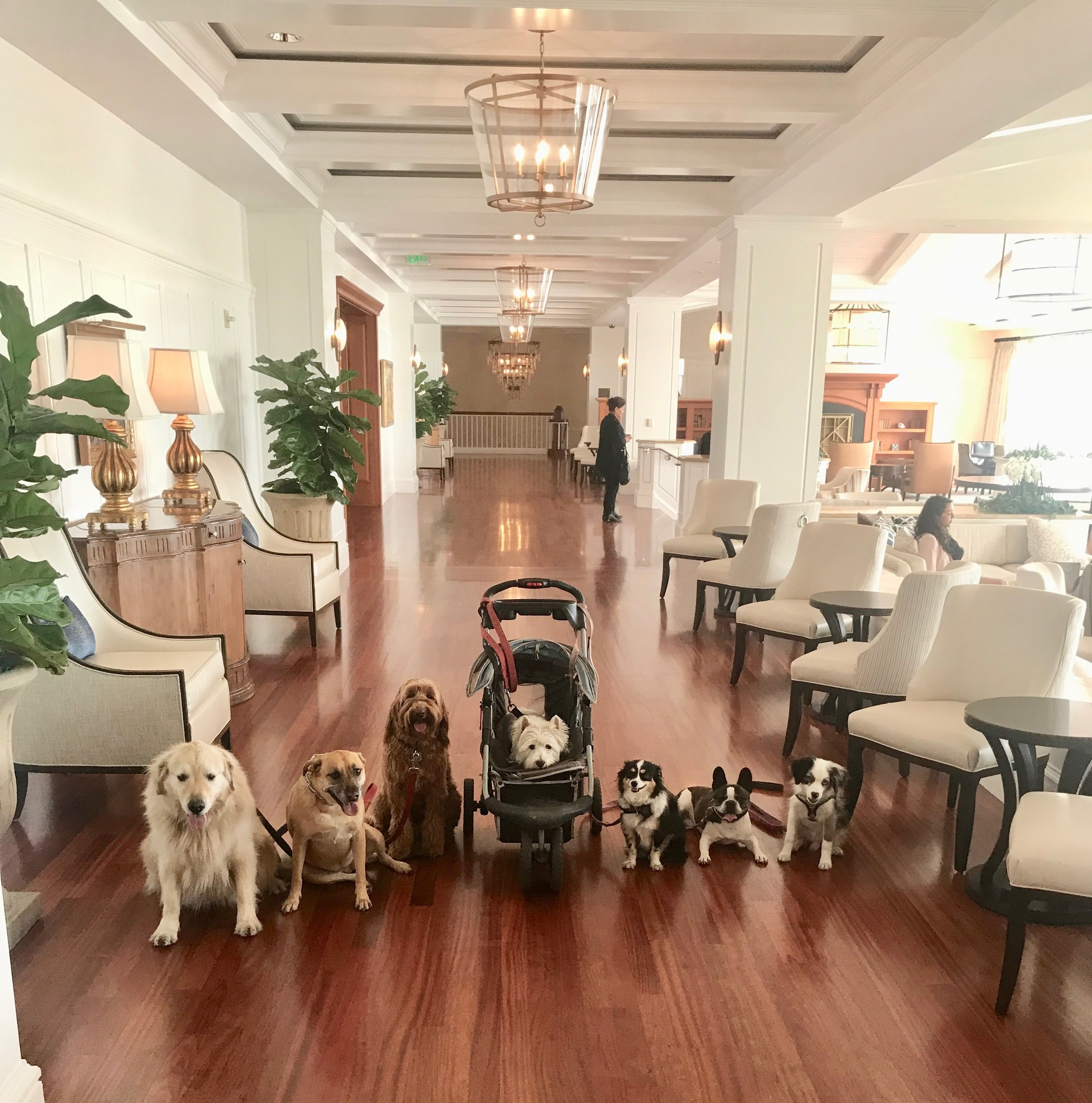 The Crew showing off their elevated behavioral skills at one of our favorite 5 Star stopping grounds - The Montage Resort & Spa in Laguna Beach, California.