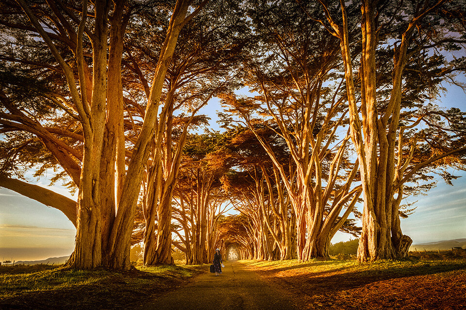 The-Happy-Wanderer-at-the-Cypress-Tree-Tunnel.jpg
