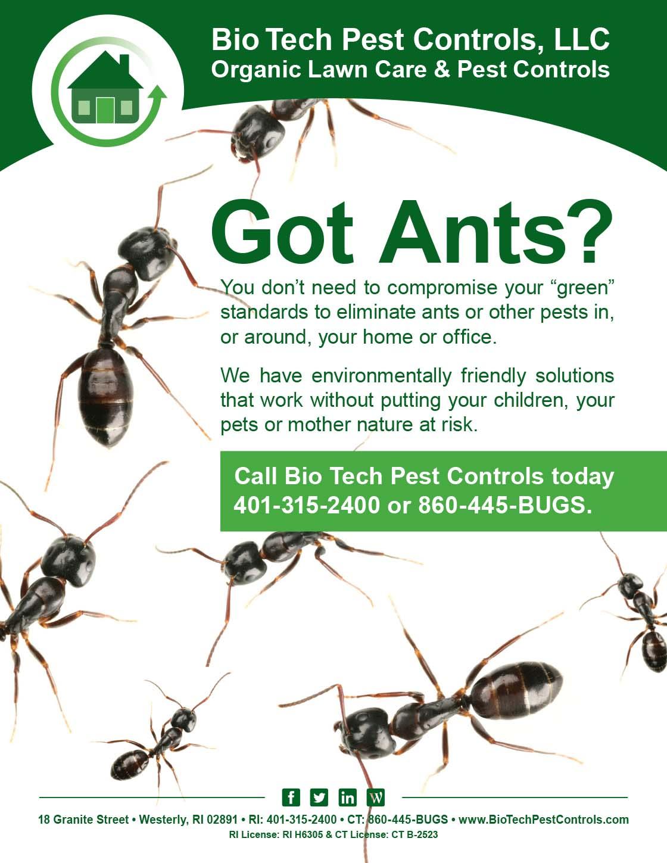 Ants_Flyer.jpg
