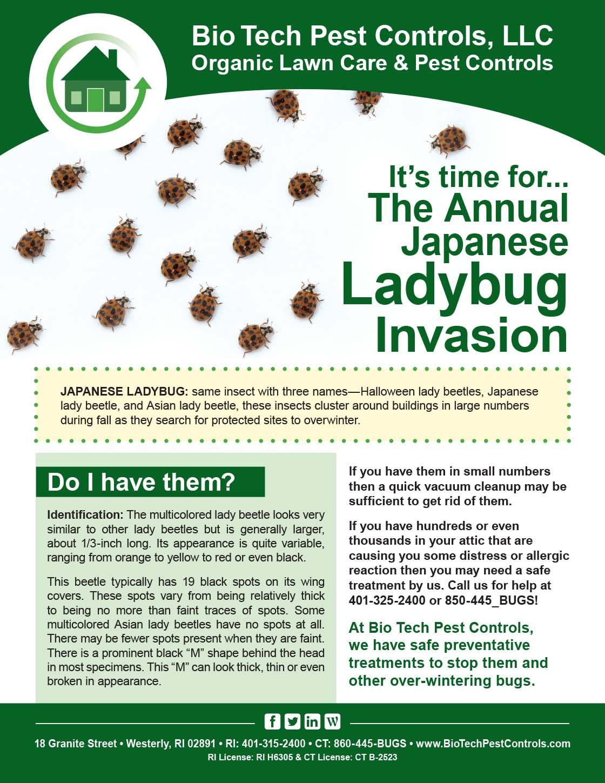 Ladybug_Flyer.jpg