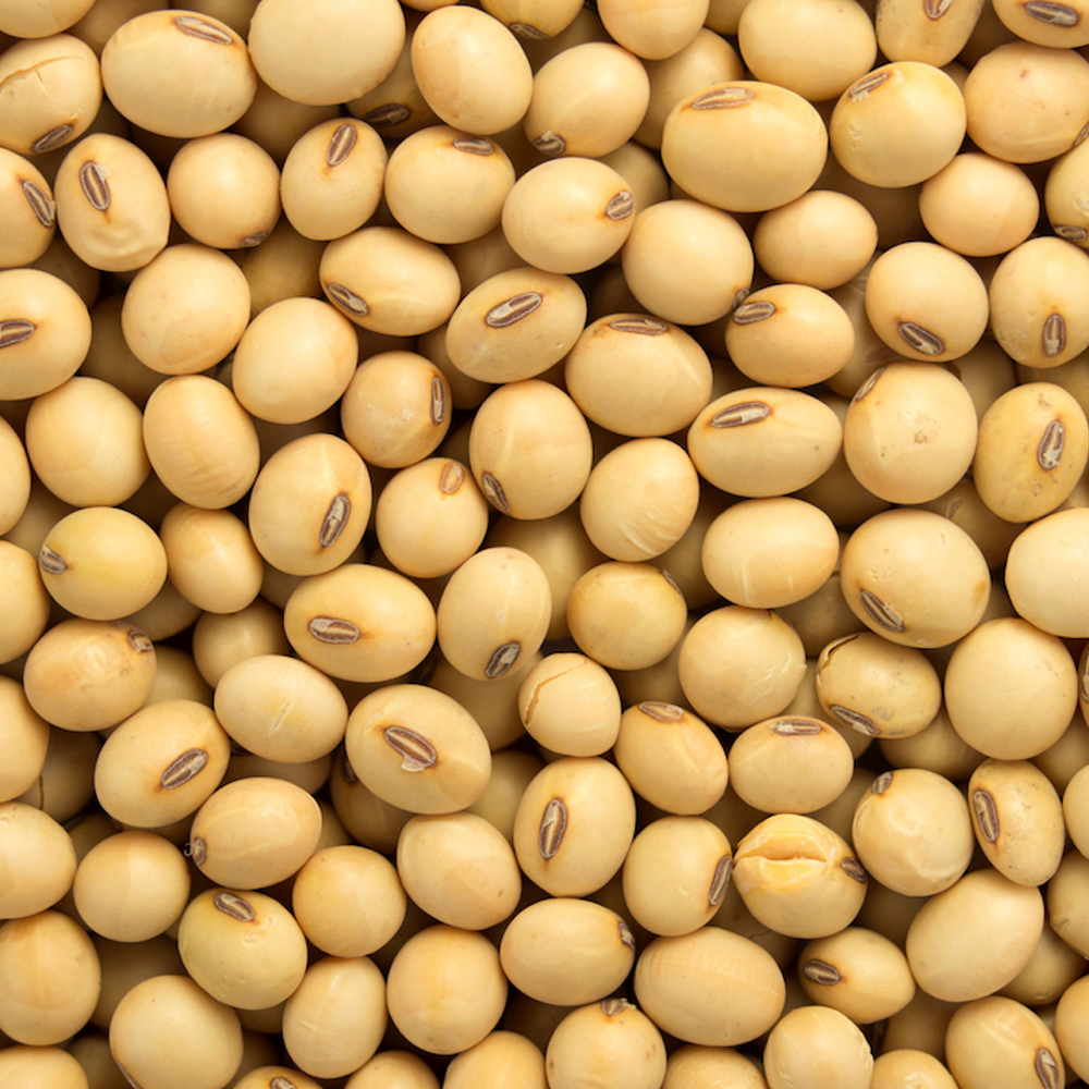 GMO-and-Non-GMO-Soyabean-Soybean-for.png