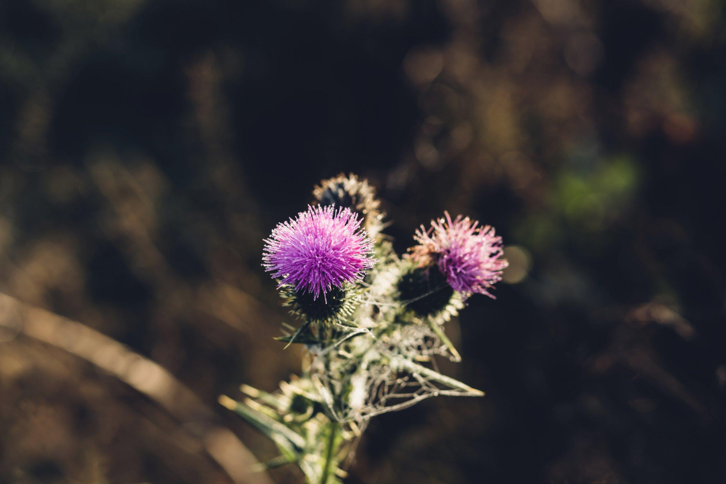 bloom-blooming-blossom-192182.jpg