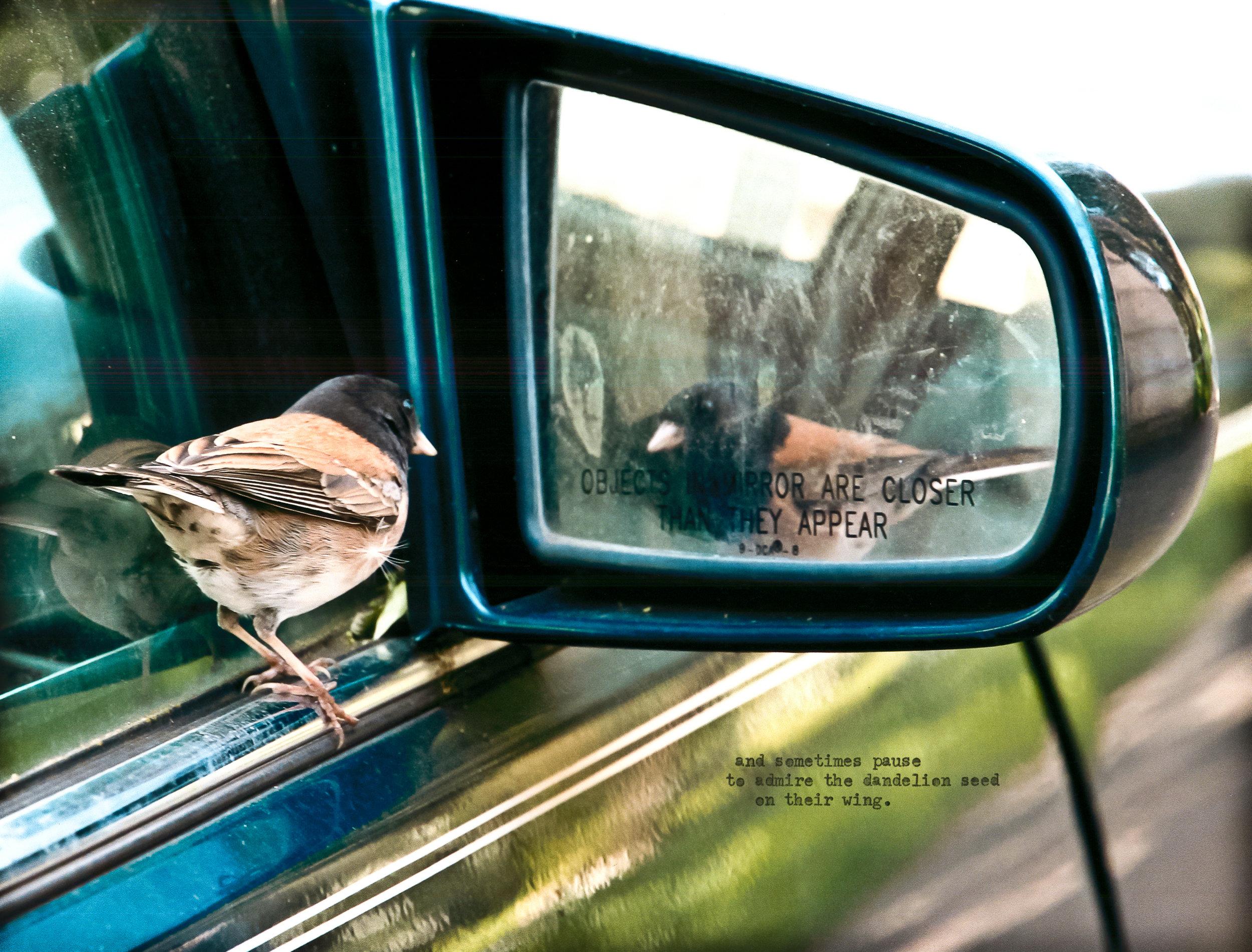 bird in mirror.jpg