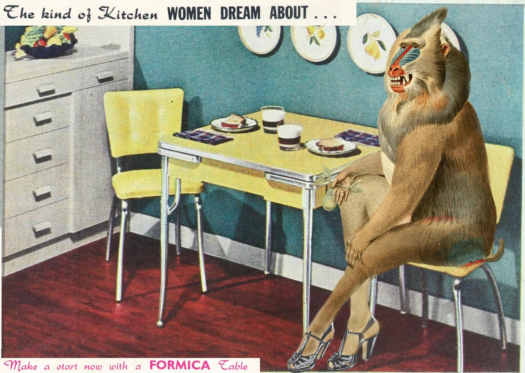 monkey kitchen.jpg