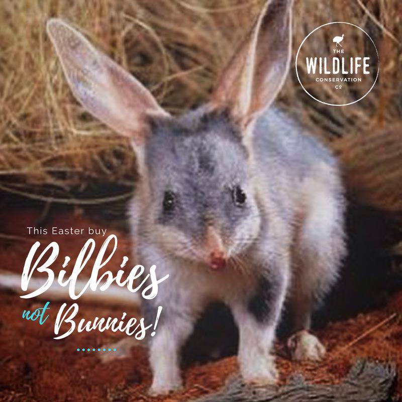 Bilbies not bunnies this easter