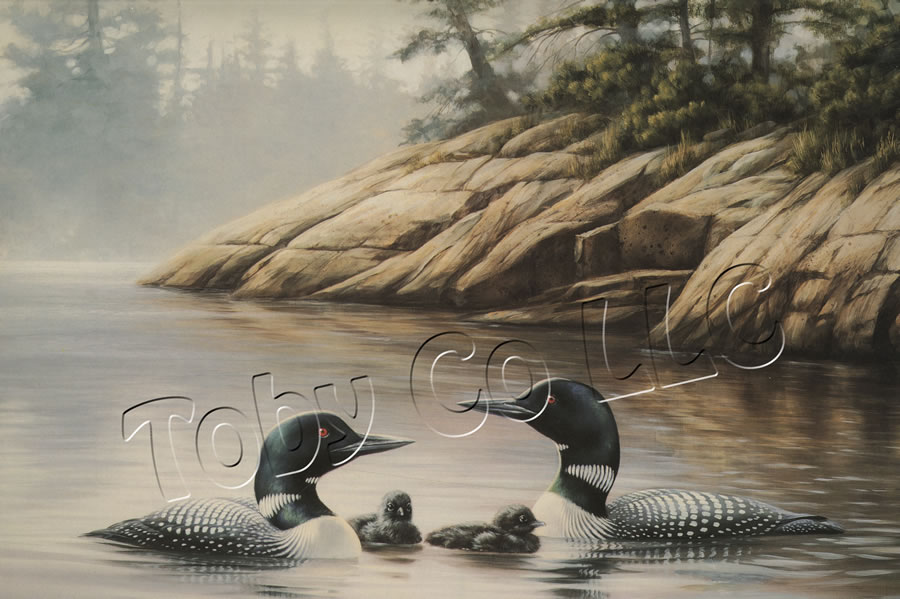 """""""Northern Mist - Loons"""""""