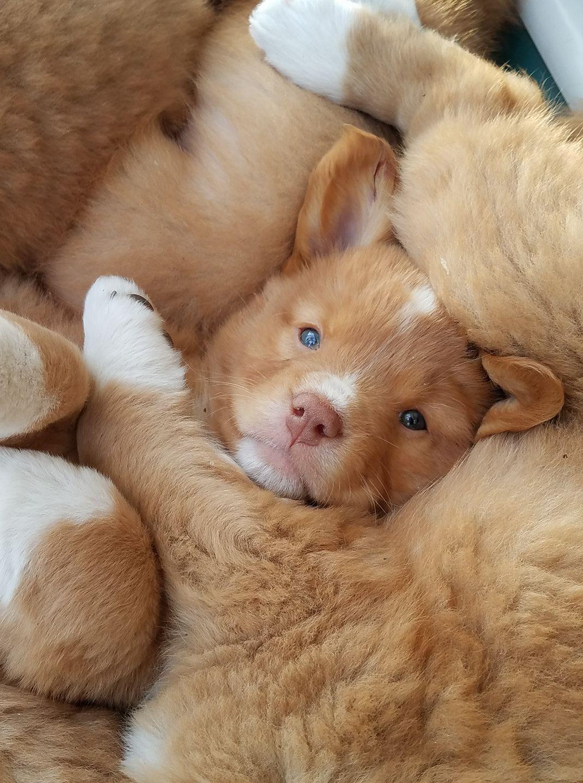 Puppies -