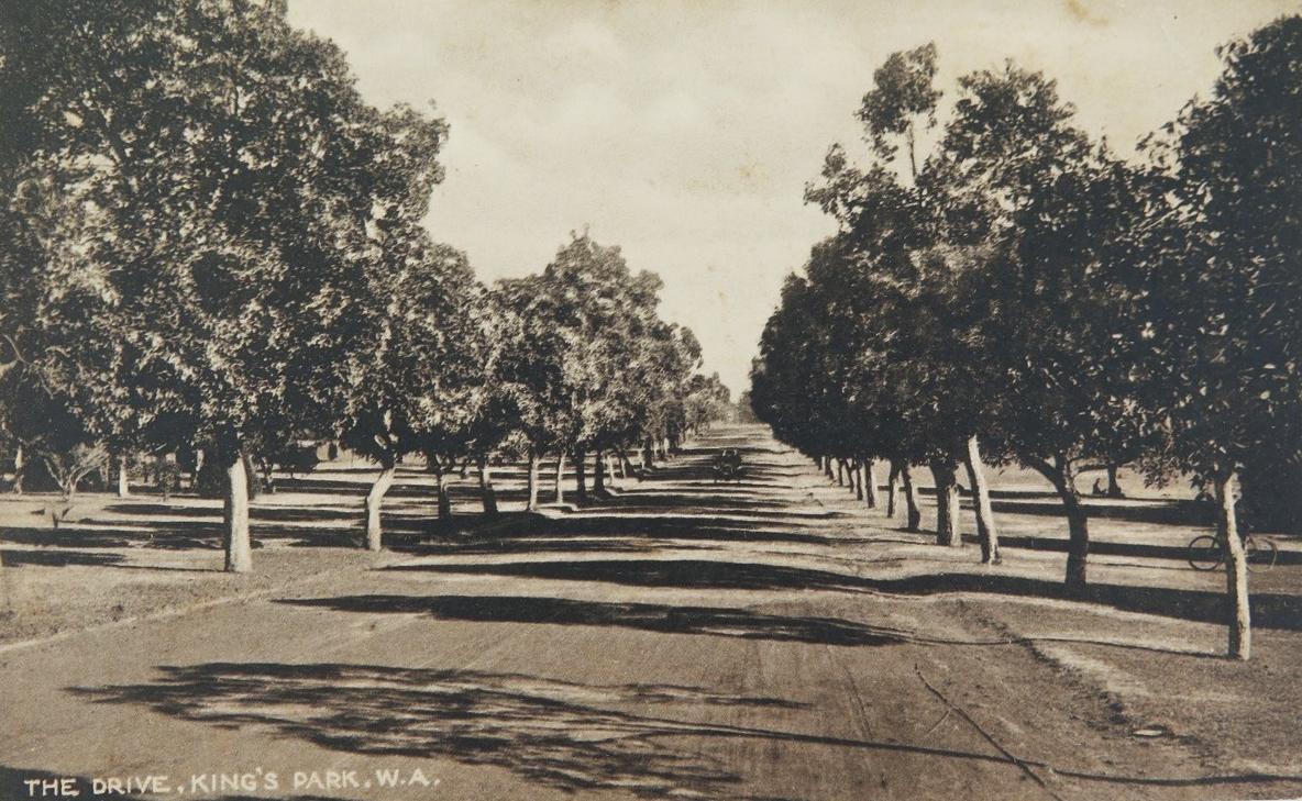 Kings Park c1905.