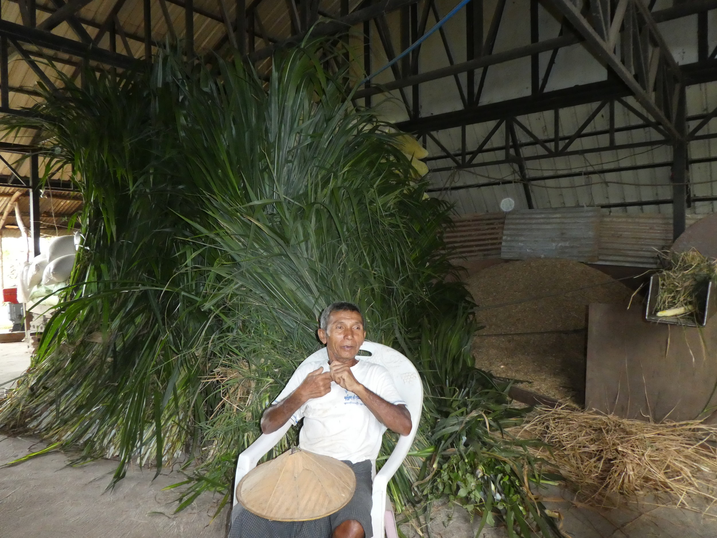 U Aung Myint discusses challenges in feed supply with MDEP team in front of overgrown Napier grass