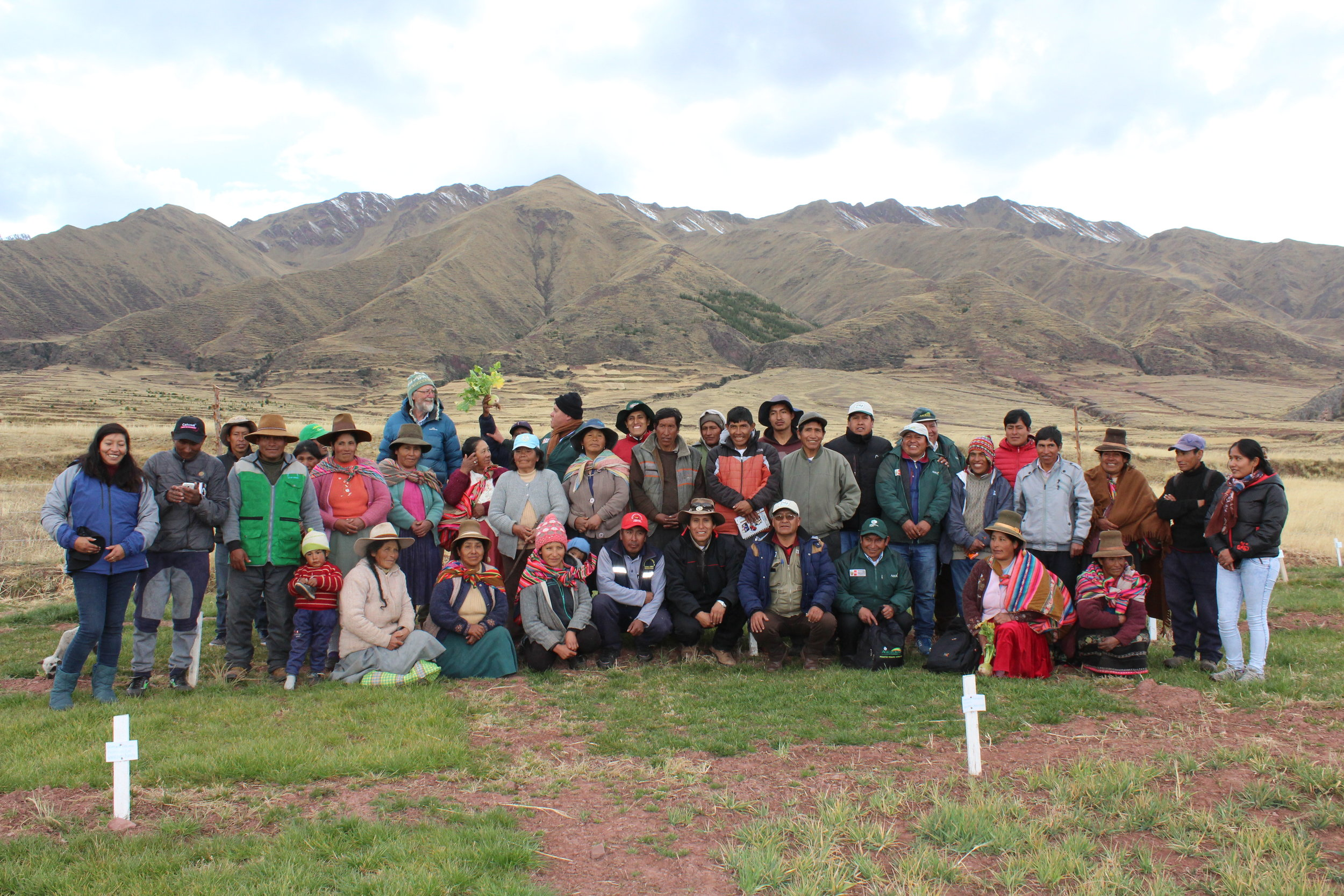 Phil Rolston, after evaluation of introduction of new forage varieties and species in Sangarara, Cusco