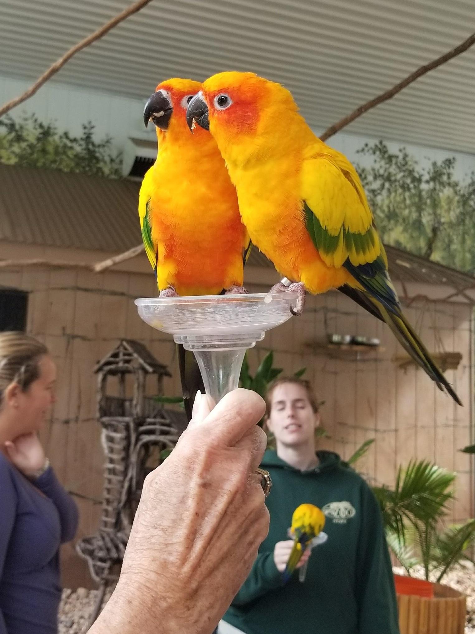 Champagne+glass+full+of+birds%21