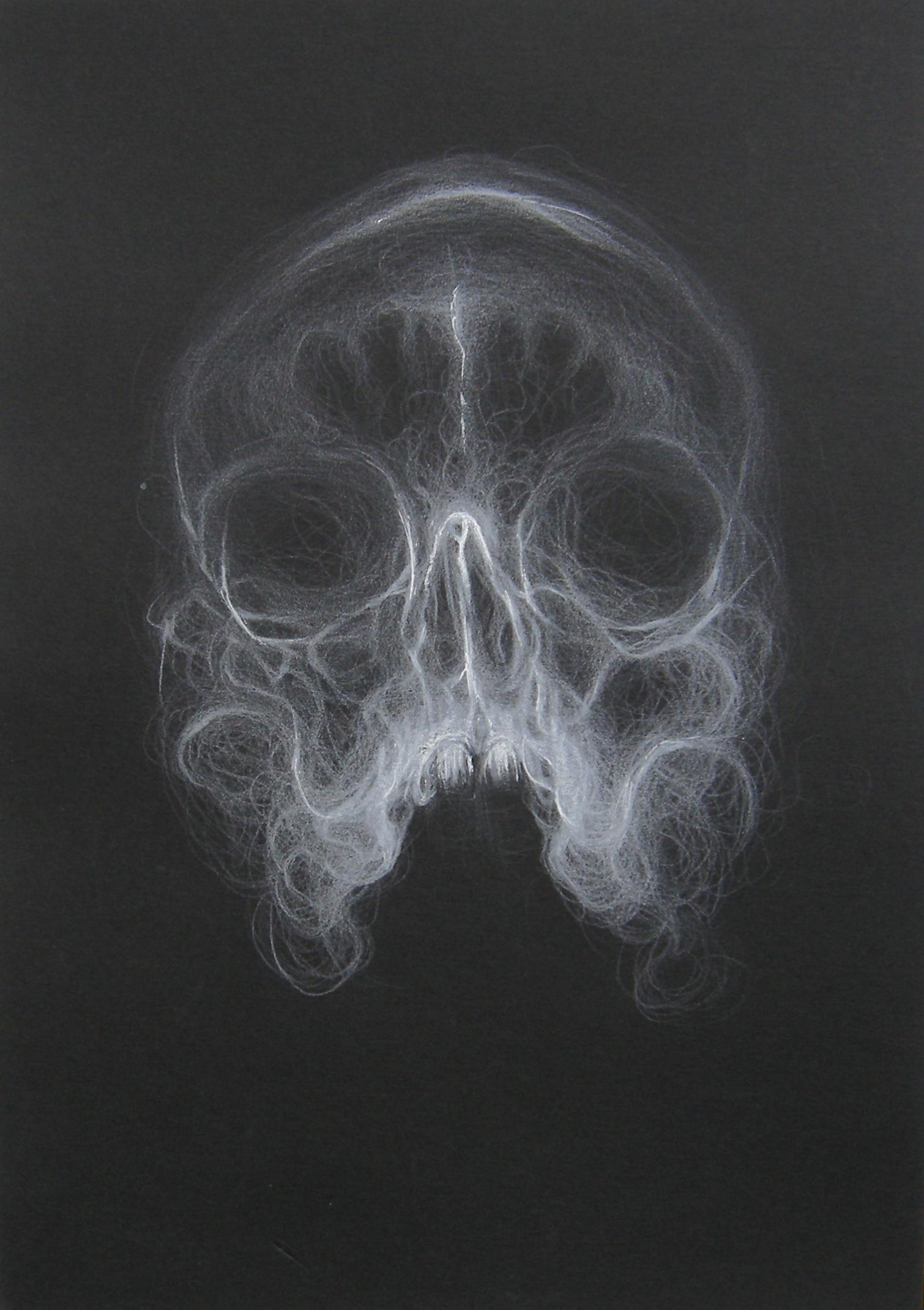Skull / 2013