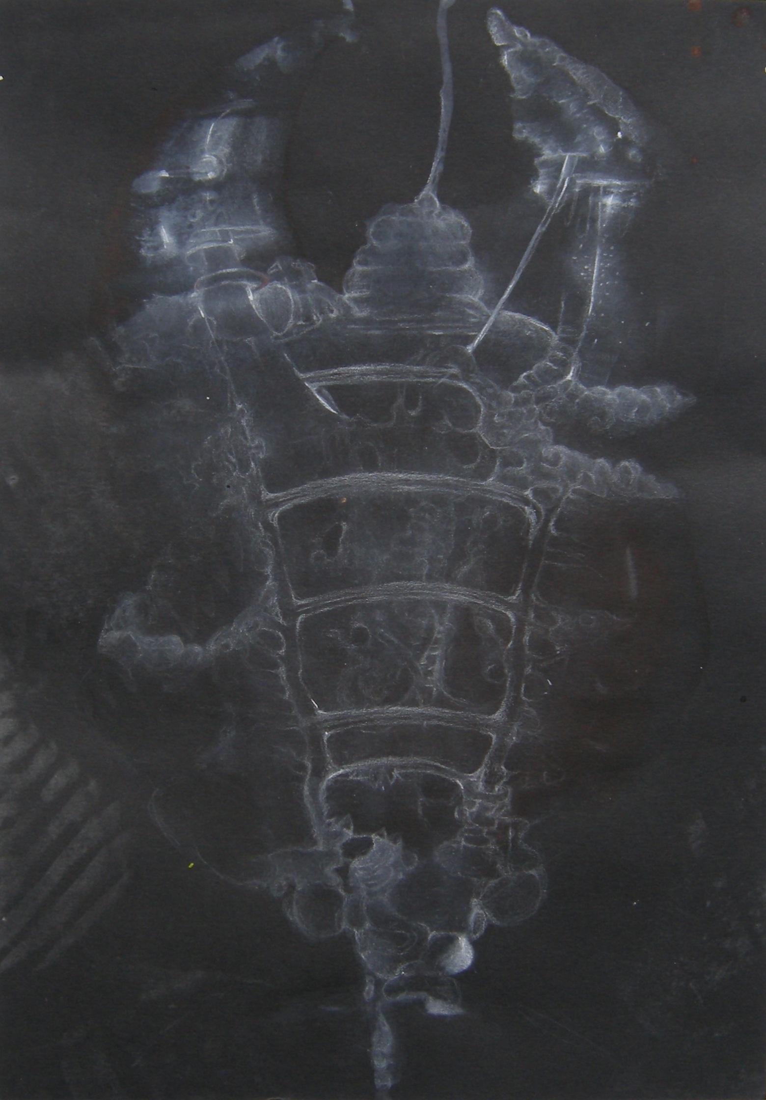 Spine / 2013