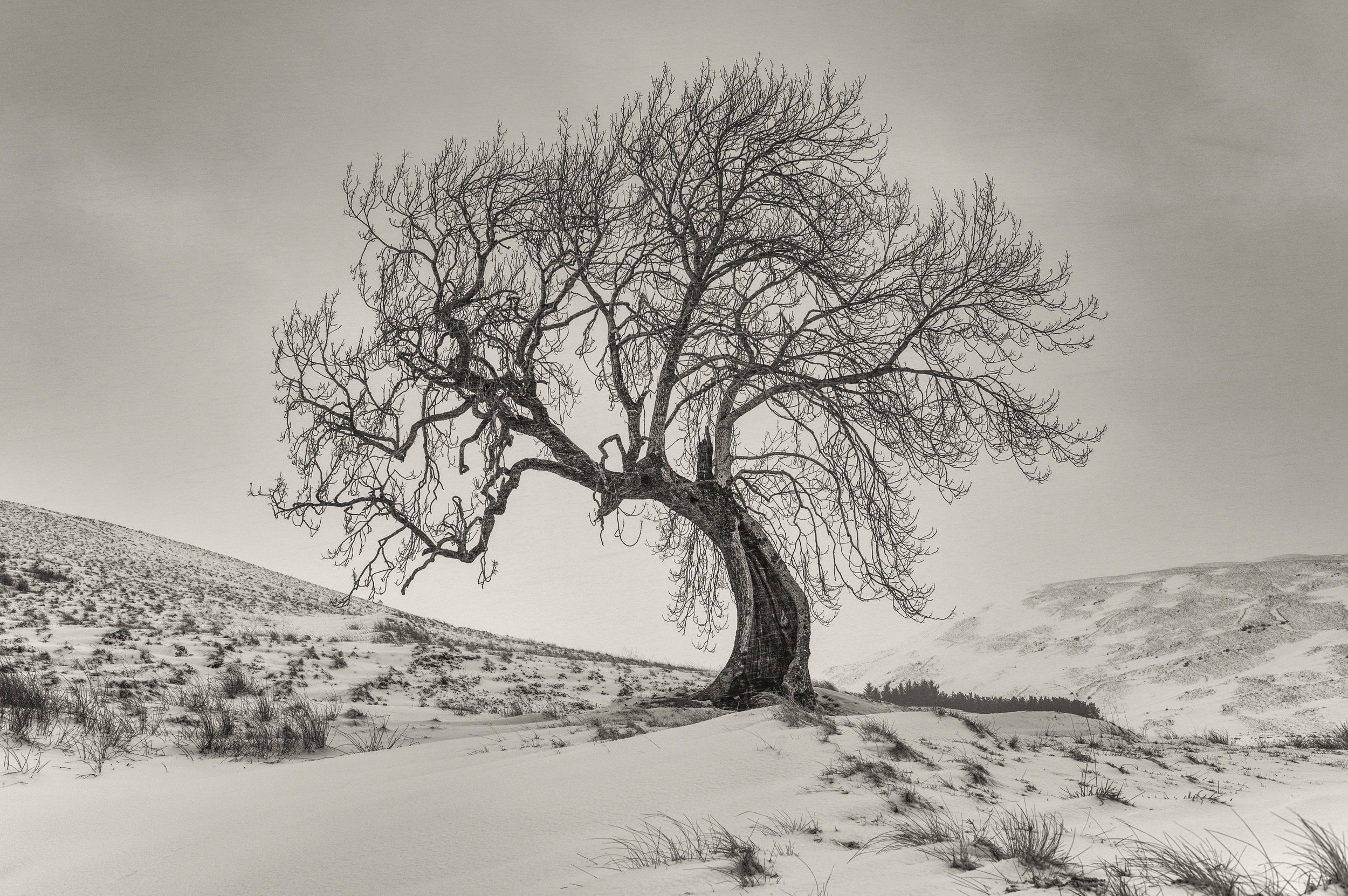 The Frandy Tree by Katherine Fotheringham