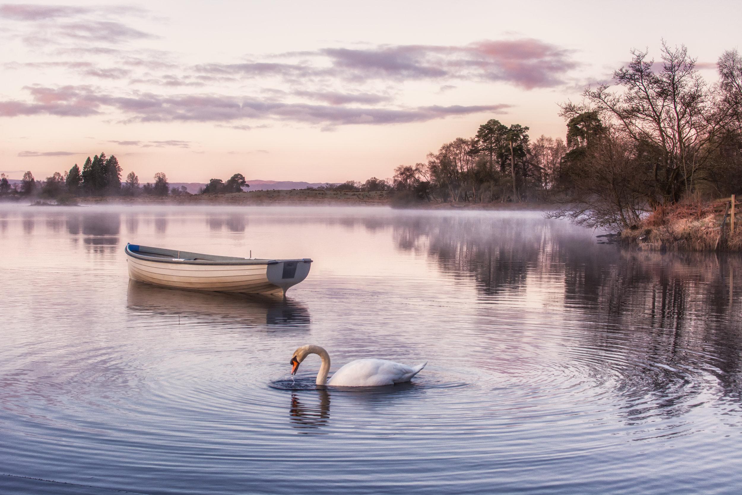 swan calendar 2-2.jpg