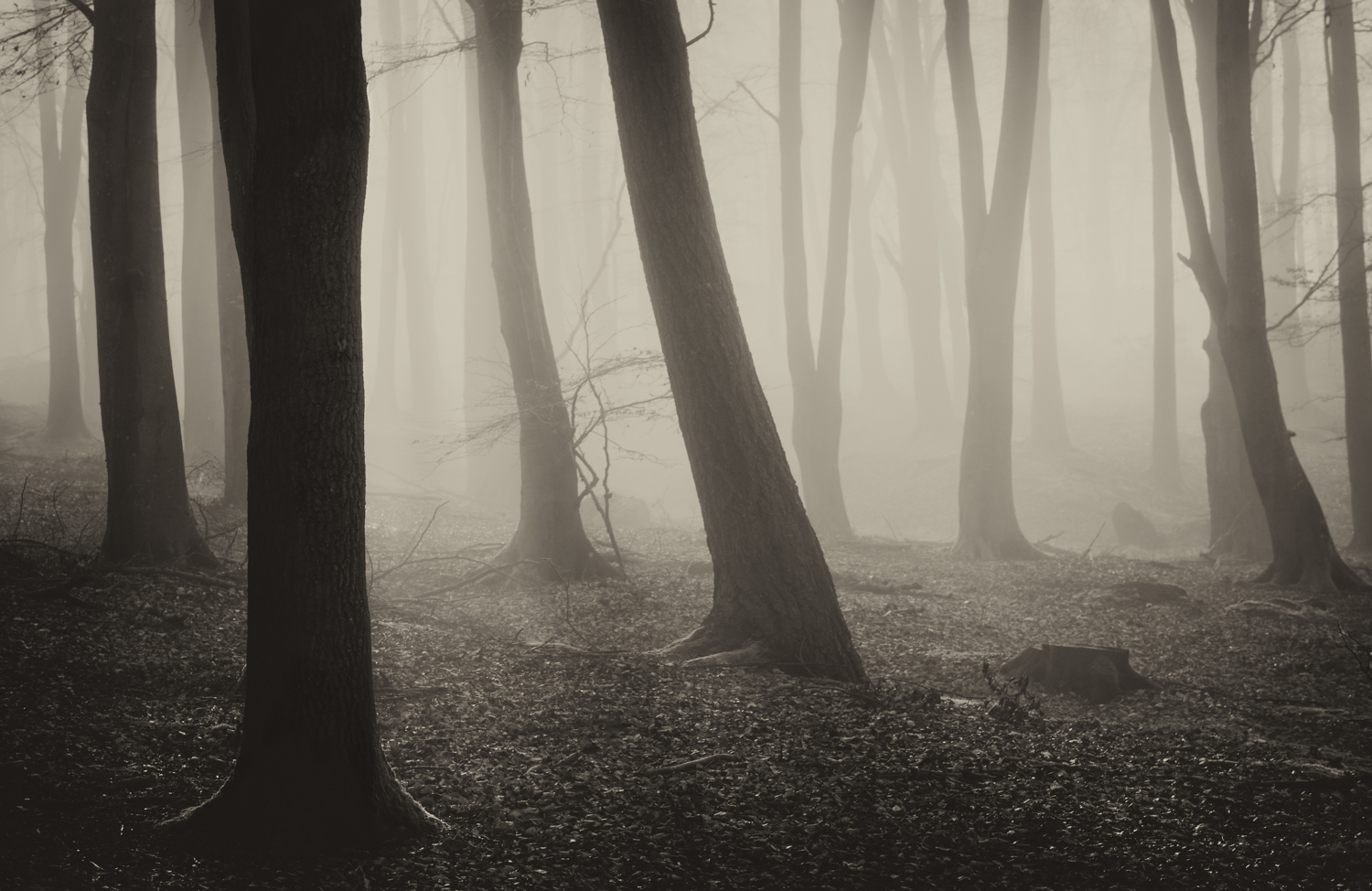 Mystic Beech by Andy Clark