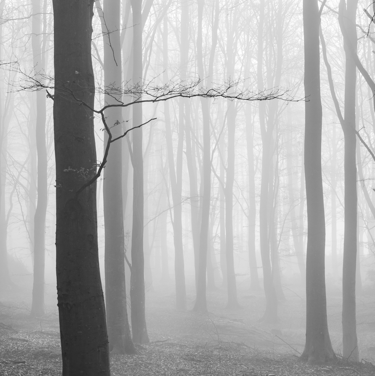 Forest of Fog by Andy Clark