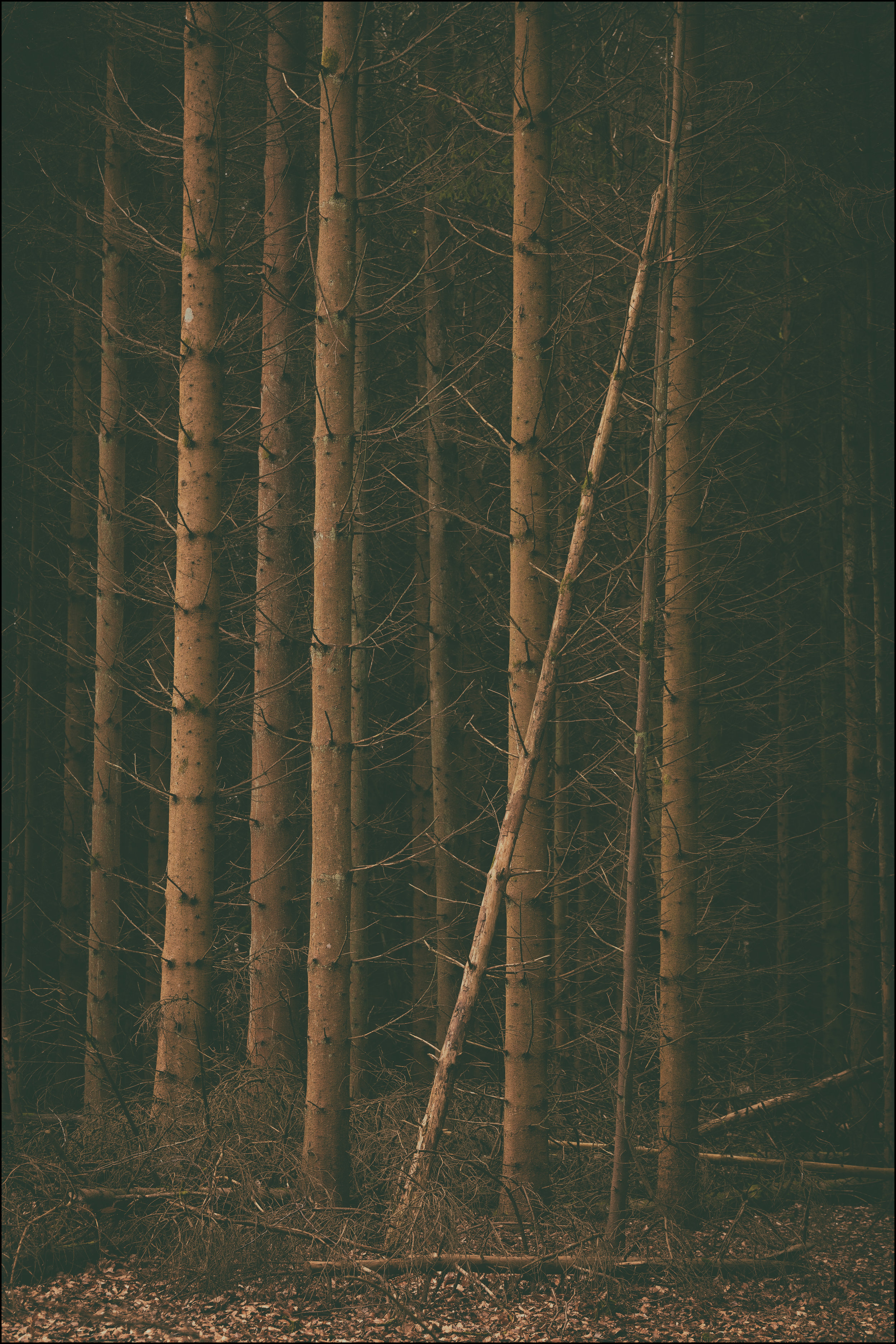 Pine  by Andy Clark