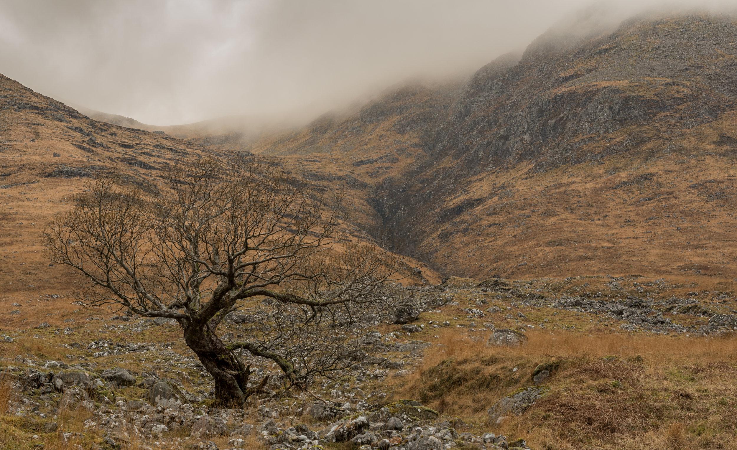 Skyfall Tree by Katherine Fotheringham