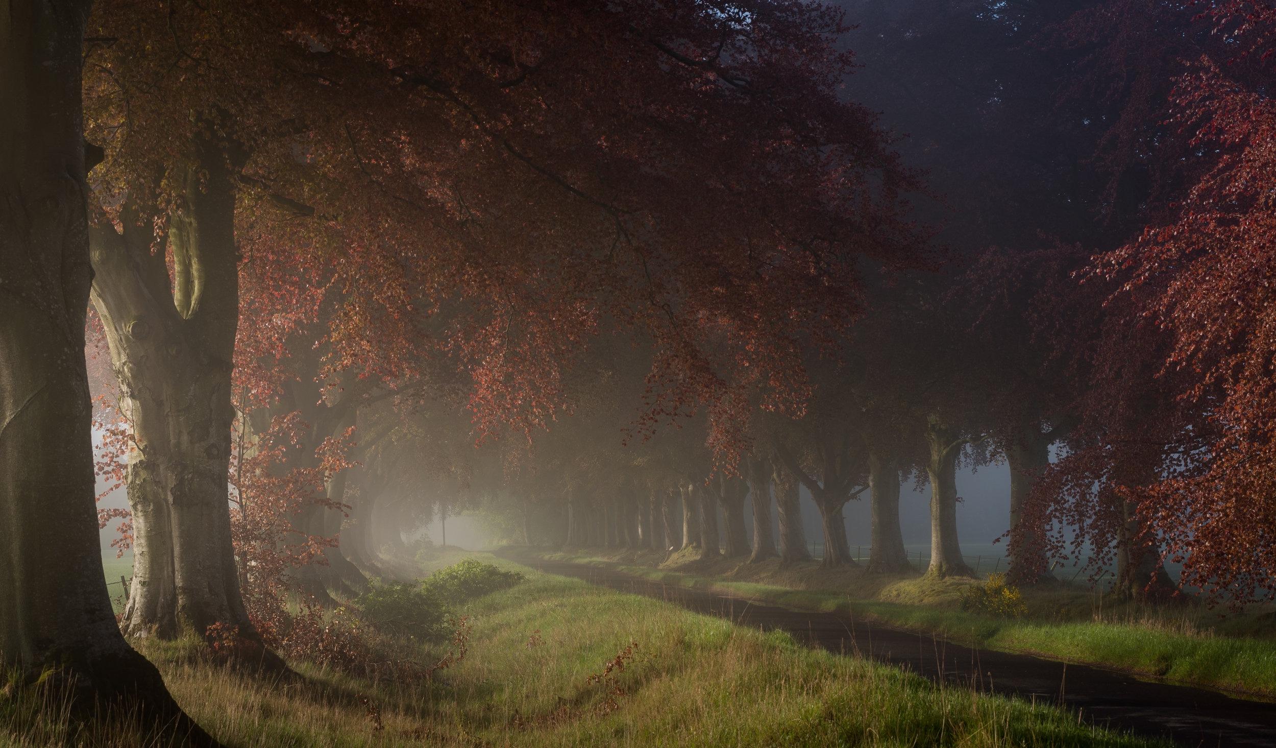 Stormontfield Fog by Katherine Fotheringham