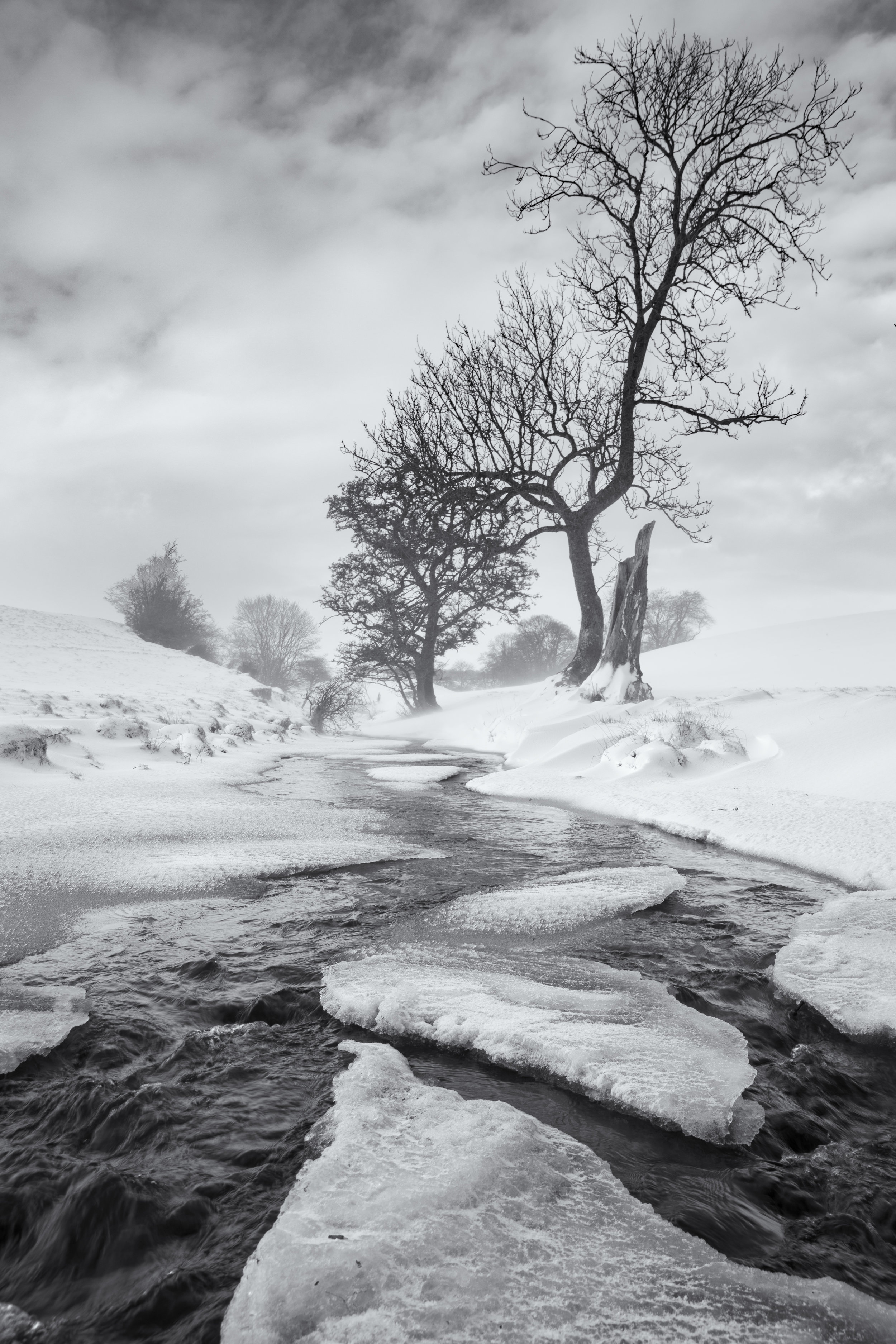 Frozen by Andy Clark