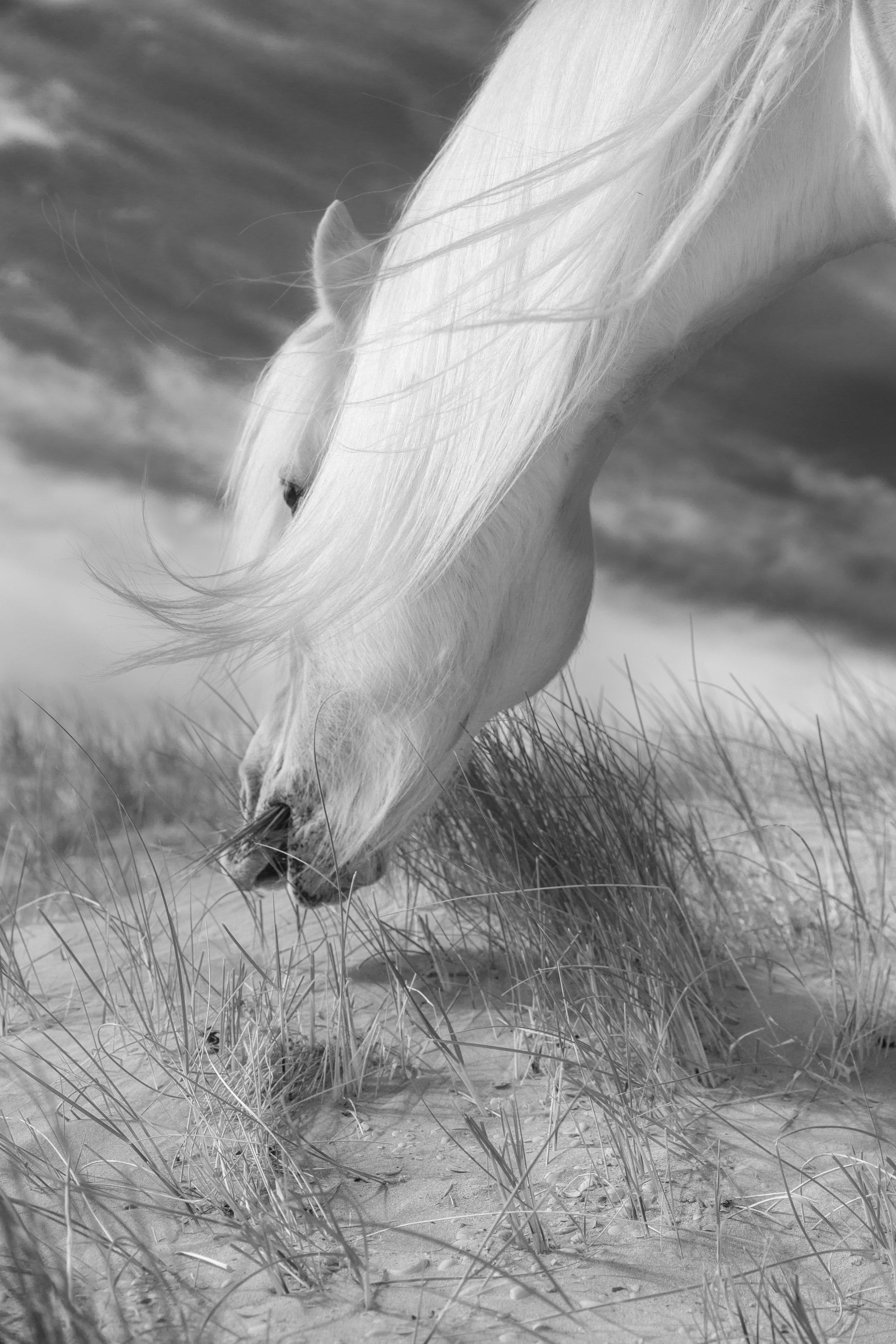 Luskentyre Pony by Andy Clark